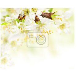 Fototapeta Wiosenne kwiaty gałązka