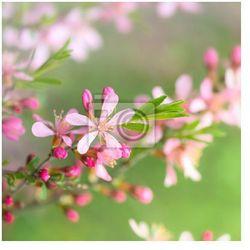Fototapeta Wiosenne kwiaty