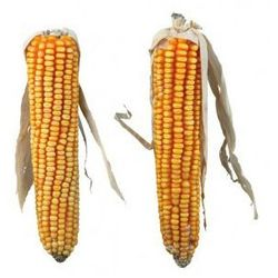 2 kolby kukurydzy 50g