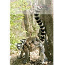 Lemury - plakat