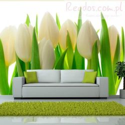 Fototapeta - Białe tulipany