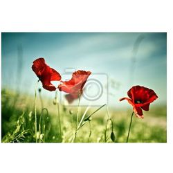 Fototapeta Wiosenne kwiaty maku