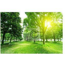 Fototapeta chodnik i drzewa w parku