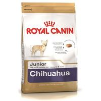 ROYAL MINI CHIHUAHUA PUPPY 500G