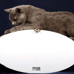 Rollo bujak / drapak dla kota