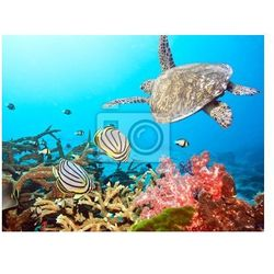 Naklejka Ryb i żółwi