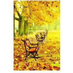 Fototapeta Wiersz czerwonych ławek w parku