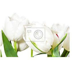 Fototapeta Wiosna białe tulipany na białym tle