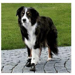 Walker Active - Ochronne buty dla psa - różne rozmiary Rozmiar:M