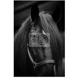 Fototapeta Kufa czarnego konia.