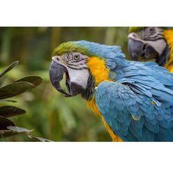 Fototapeta papugi 472