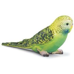 Papuga Zielona