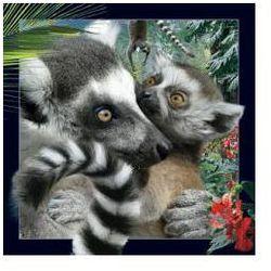 Pocztówka 3D Lemur