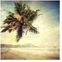 Plakat grunge palm-8